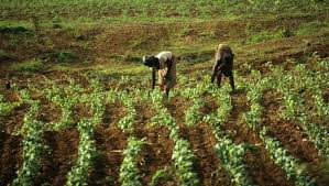 Les espaces ruraux du Sud : de l'agriculture vivrière à l'agrobusiness